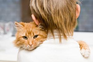 Seguros para animais de estimação apresentam crescimento