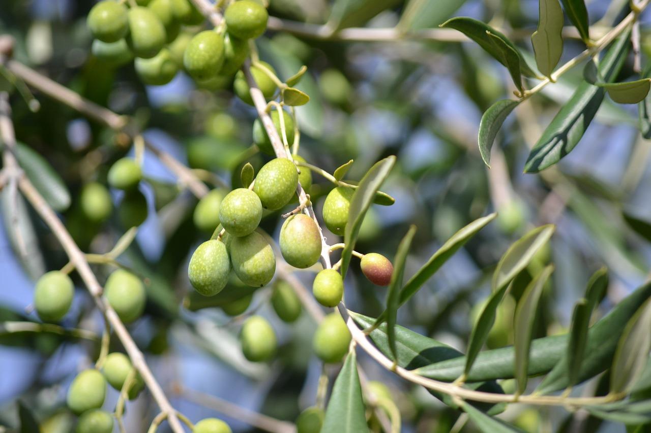 Azeite de oliva extra virgem e o Alzheimer