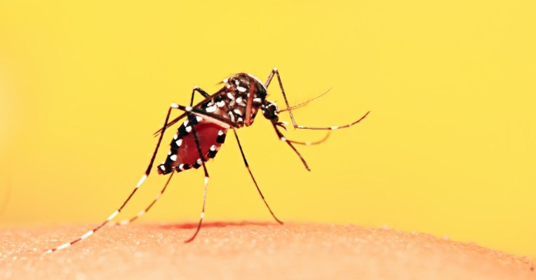 Plano de saúde cobre febre amarela?